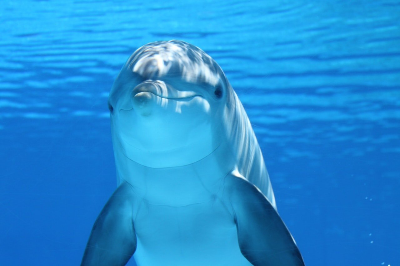 Study Proves Dolphins Share Human's Ability To Reflect